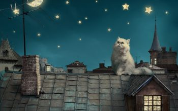 Persian White Cat Kitten Fairytale Fantasy Roof House Sky Night