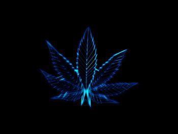 Pot Leaves Marijuana Drug