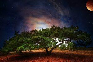 Tree Art Planet Light Fantasy Science Fiction Galaxy Sky Stars