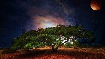 Tree Art Planet Light Fantasy Science Fiction Galaxy Sky Stars